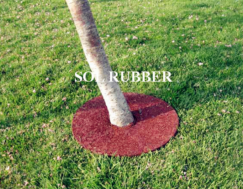 Rubber Tree Ring